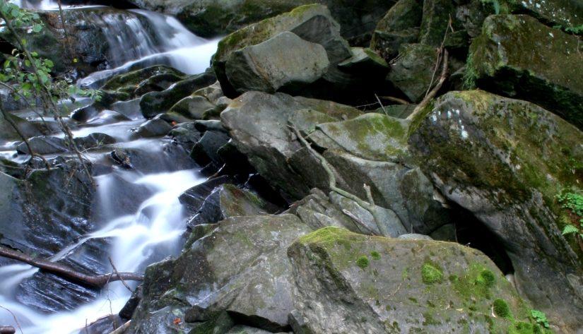 Kamienny las – Bajm