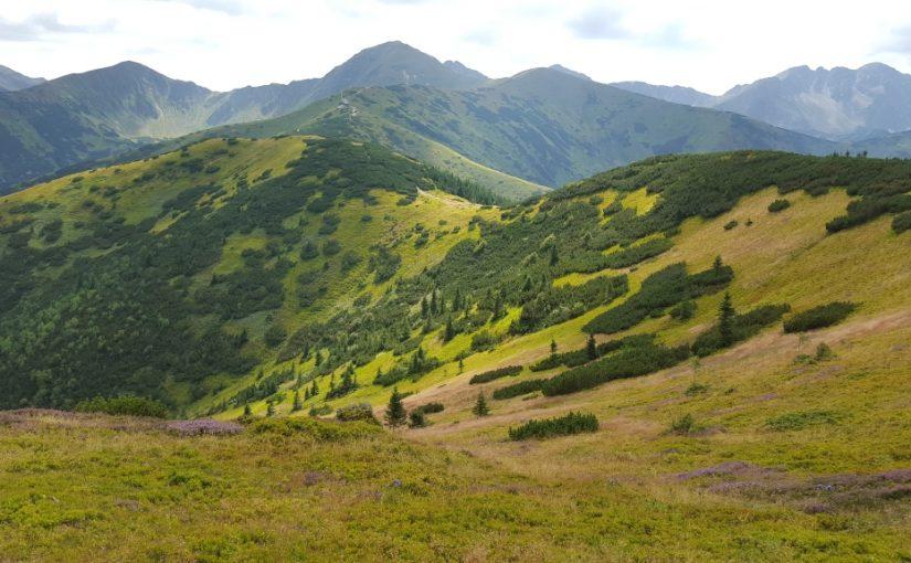 Podanie do Góry – Wolna Grupa Bukowina (WGB)